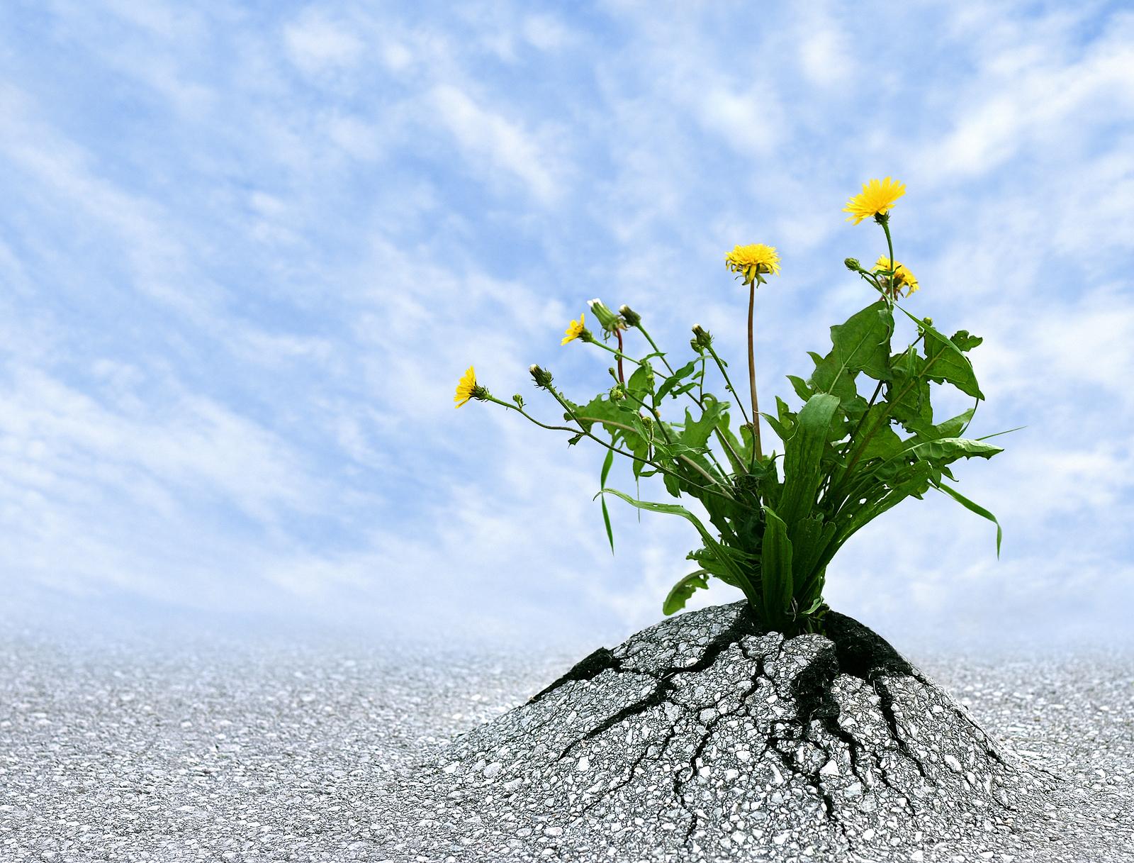 Stressmanagement: Vergroot je eigen veerkracht!